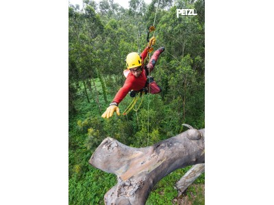 Учебно-методический обучающий СЕМИНАР «Обслуживание деревьев. Безопасность и минимизация вреда при работе на деревьях»